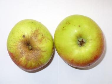 Apfelsorte Jakob Lebel