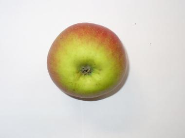 Apfelsorte Kaiser Wilhelm
