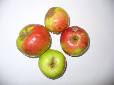 Apfelsorte Welschisner